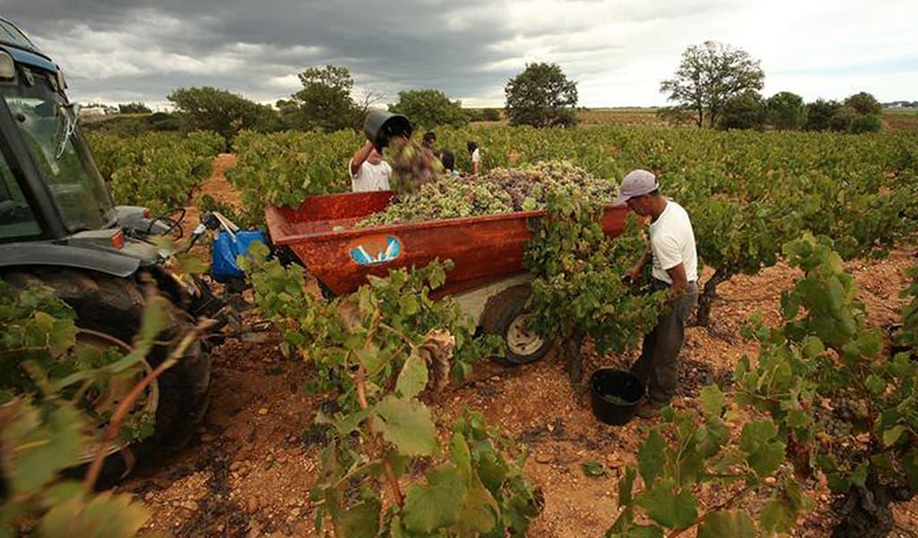 Weingut Alma Cersius Wein Languedoc Winzer Spanien