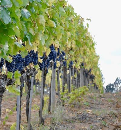 Weingut Tenimenti Andreucci Winzer Toskana Italien