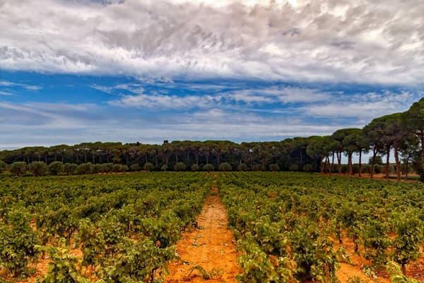Weingut L'Antesi Wein Apulien Winzer Italien