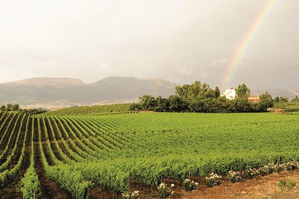 Weingut Baglio di Pianetto Wein Sizilien Winzer Italien