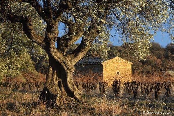 Weingut Fonjoya Delta Winzer Languedoc Frankreich