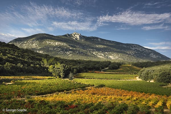Weingut Fonjoya Delta Languedoc Frankreich