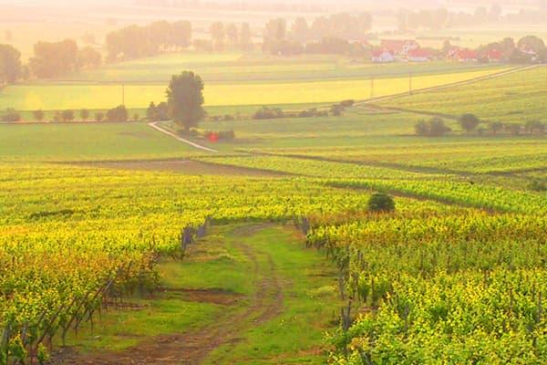 Weingut Gustavshof Wein Rheinhessen Winzer vegan