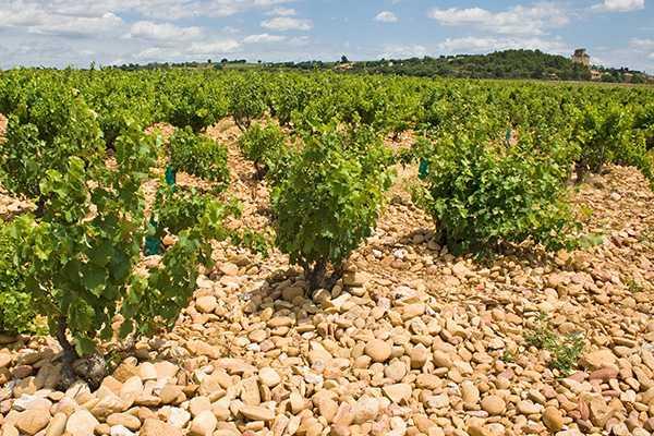Weinberg Anbaugebiet Châteauneuf du Pape Frankreich Rhônetal