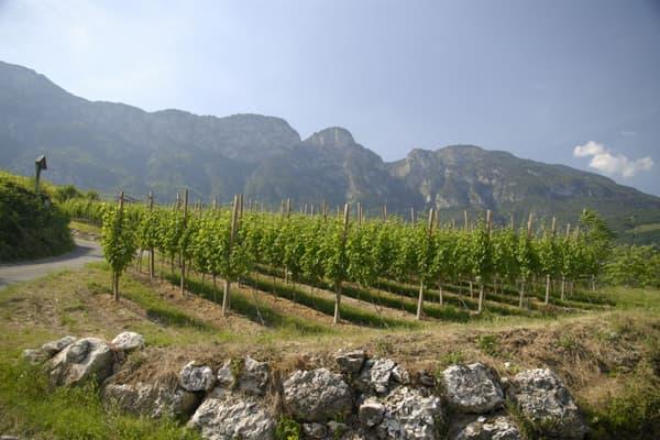 Weingut Nals Margreid Wein Südtirol Winzer Italien