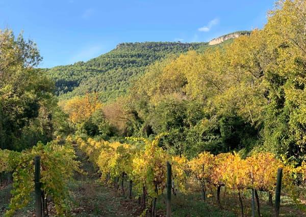 Weingut Pares Balta Penedes Spanien
