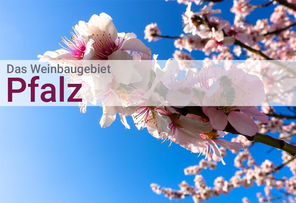 Pfalz Wein Hunfeld Deutschland Qualitätswein