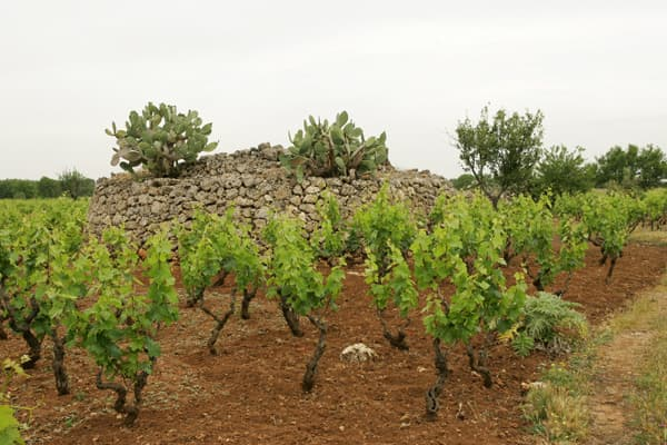 Weingut Terre di Campo Sasso Wein Sizilien Winzer Italien