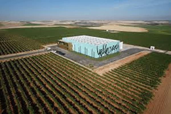 Weingut Grupo Valdecuevas Rueda Spanien Winzer
