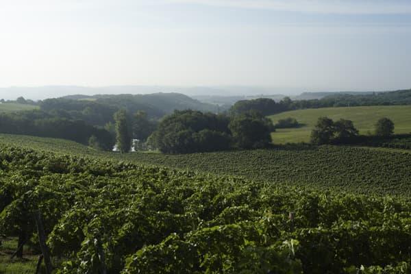 Weingut Vignobles Fontan Wein Gascogne Winzer Frankreich