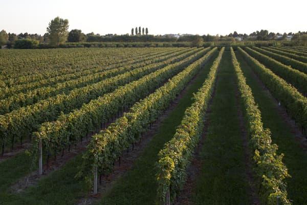 Weingut Viticoltori Ponte Wein Venetien Winzer Italien