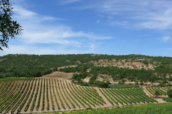 Weingut Vizcarra Ramos Wein Ribera del Duero Winzer Spanien