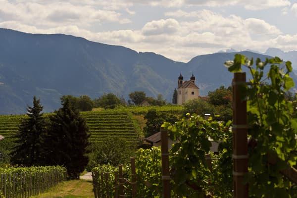 Destillerie Walcher Grappa Südtirol Winzer Italien