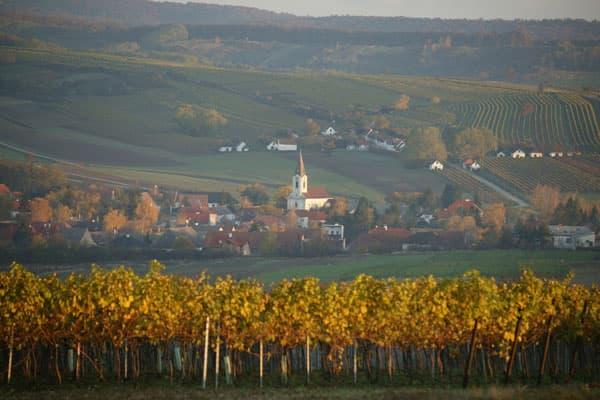 Weingut Weinrieder Wein Weinviertel Winzer Österreich