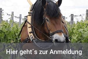 Hunfeld Wein-Abo Bio und Vegan Weine 3 Flaschen Preis bis 40 Euro vierteljährlich
