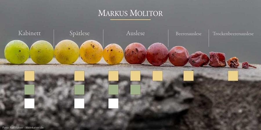 Weingut Markus Molitor Beerenqualitäten Mosel Deutschland