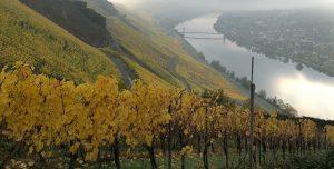 Weinlese 2020: Weingut Markus Molitor (Mosel)