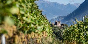 Weinlese 2020: Weingut Nals Margreid (Südtirol)